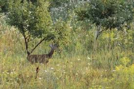 Keeping Deer Away From Trees  Deer Repellent PacksKeep Deer Away From Fruit Trees