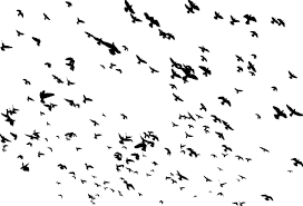 bird flying silhouette png. Perfect Flying Huge Flock Of Birds Flying Silhouette For Bird Png O