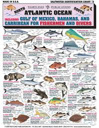 Saltwater Fish Chart Saltwater Fishing Charts And Saltwater Fish Identification