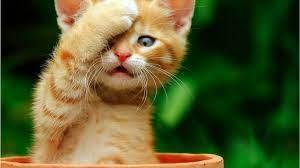 download cute cat hd wallpaper just ...