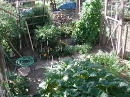 proper soil preparation before planting leads to healthy and productive vegetable crops
