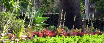 Small Picture Living Colour Landscapes Garden Design Bayview