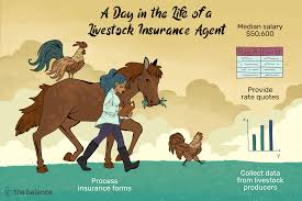 Entry level positions start at $32,000 per year while most experienced workers make up to $170,000 per year. Livestock Insurance Agent Job Description Salary More