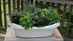anything can be a planter like this upcycled baby bathtub visit the hobby farms to learn how it s prepared to grow edible greens like kale and lettuce