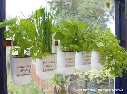hanging milk jugs used as a bottle herb garden grillo designs grillo