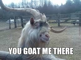 Goat Memes. Best Collection of Funny Goat Pictures via Relatably.com
