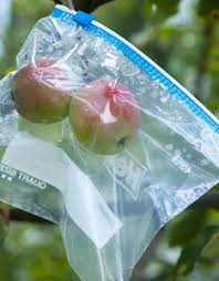 Full Apple Tree Netting Demo Protect Against Fruit Fly Birds How To Protect Your Fruit Trees From Squirrels