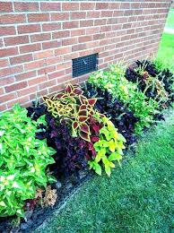 outdoor plants full sun container plants for full sun and heat gallery of best flowers for