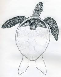 Small Picture How To Draw A Turtle