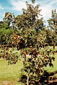 Fruit Tree Nursery North Carolina