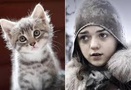 Arya de Game of Thrones et sa verison chat. Retrouvez tous les autres personnages de la série et leur doppelgänger félin sur Addictomovie. - Arya-Game-of-Thrones