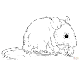 Great Mouse Coloring Page 16 With Additional Seasonal Colouring ...
