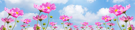 Image result for may flowers images