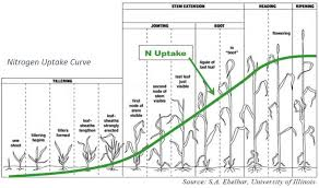 Winter Wheat Growth Stages Chart Nitrogen On Winter Wheat Thompsons