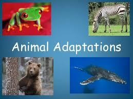 Plant And Animals Adaptations Venn Diagram Animal Adaptations Introduction