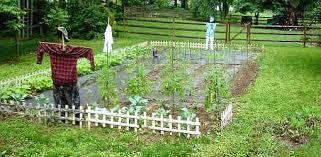 size vegetable garden