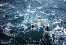 penguins a falklands photo essay org prevnext