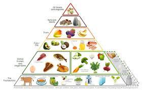animal food pyramid. Modren Food The Best Foods  And Animal Food Pyramid I