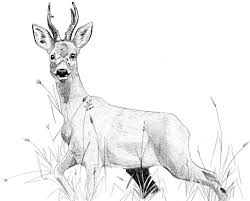 16 Best Wildlife Art Images On Pinterest Wildlife Art Pencil