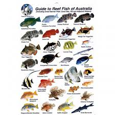 Australian Reef Fish Species Chart Fish Species Identification With Over 400 Saltwater And
