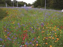 Wildflower Garden Design Unique How To Create A Mini Wild Flower Meadow Sarah Raven