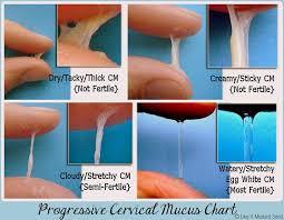 Checking Your Cervical Fluid Mucous Amy O Mara