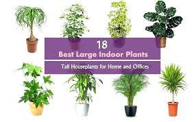 low maintenance office plants. Good Indoor Plants No Sunlight Best . Office Low Maintenance