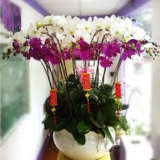 tet lunar new year flowers florist gifts quà quà tết