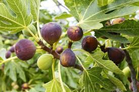 7 Easily Propagated Fruits For Transforming Your Backyard Into A Tree With Blackberry Like Fruit
