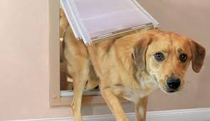 we spent over 39 hours researching and testing 20 diffe dog doors and found that ease of installation size choice and warranty were most important
