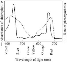 Action Spectrum Photosynthesis 1