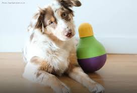 mental stimulation is just as important as physical for your dog and interactive dog toys