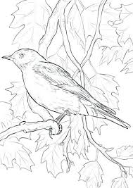 Eastern Bluebird Coloring Page Pages Animals Realistic Birds Dpalaw