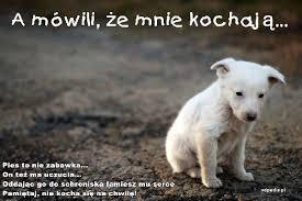 Uczucia, chwila, serce, pies, mem, cytaty, zabawka - xdPedia (295793)