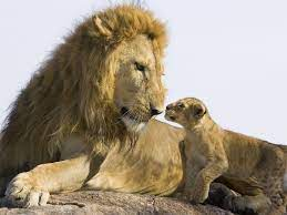 Lion Cubs Wallpapers - Wallpaper Cave