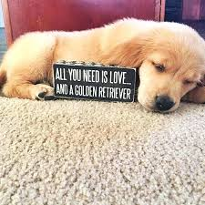 Cute Dog Quotes For Instagram Beauteous Cute Dog Quotes For Instagram With Cute Dog Quotes For To Create