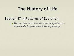Section 17 4 Patterns Of Evolution