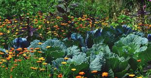 edible landscaping how to start a beautiful perennial plot for food supply