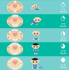 Baby Awake Time Chart Teething And Sleep Wee Bee Dreaming Pediatric Sleep Consulting