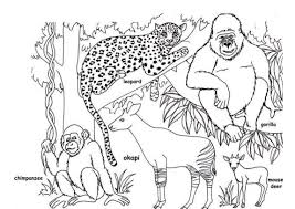 rainforest animal coloring page alic e me and animals pages