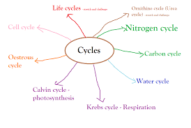 biology synoptic essay aqa a biology writing the synoptic essay  biology synoptic essay below is an example of a spider diagram below is an example of