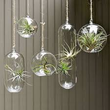 Unusual Air Plants  Home Decoration Inspiration Ideas And Gifts Decorative Plants For Home