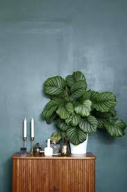great office plants. Medium Image For Urban Jungle Book More Best Small Indoor Office Plants Desk Great