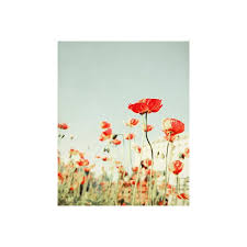 red poppies red poppy wall art spring floral decor color pop  on red poppy flower wall art with red poppies red poppy wall art spring floral decor color pop