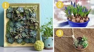 indoor gardening, succulent, forcing bulbs