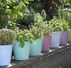 blog 1024x768 containergardening 052217 3