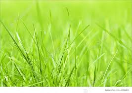 Plants Green Grass Background Stock Photo I1899451 at FeaturePics