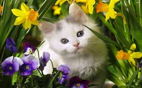 cute cats and kittens wallpapers.  Kittens Cute Cat Wallpapers Kitten Wallpaper For Iphone And Cute Cats Kittens Wallpapers