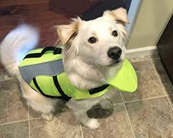 Vivaglory Size Chart Vivaglory Dog Life Jackets With Extra Padding For Dogs Medium Extra Reflective Yellow