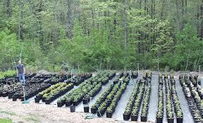 should i use landscape fabric plant